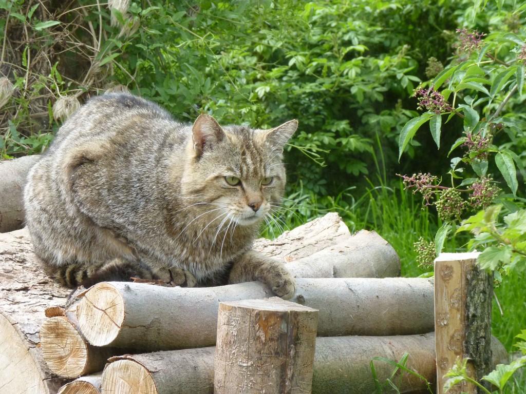 (Jan Preller - Wald und Holz NRW)