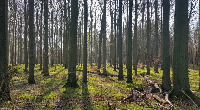 Wir bringen Euch den Wald nach Hause